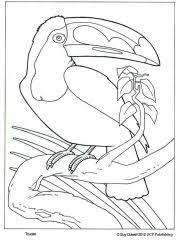 Small Picture Two Toucans Coloring page paper piecing Pinterest Paper