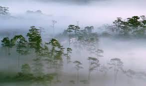 Image result for sương mù đà lạt
