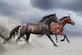 horses running in the wind. Contemporary Running Two Horses Running At A Gallop To Horses Running In The Wind O