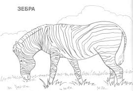 Small Picture Coloring Pages Free Coloring Pages Realistic Animals Realistic