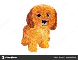 dog ockapoo watercolor ilration stock photo