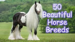 most beautiful horse breed in the world. 50 Most Beautiful Horse Breeds In The World And Breed