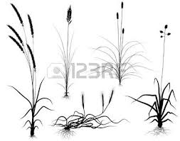 tall grass silhouette. Set Of Editable Vector Flowering Grass Silhouettes With Easily Interchangeable Flower-heads Tall Silhouette C