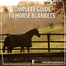 Complete Horse Blanket Guide Jeffers Blogs