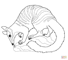 Small Picture Numbat coloring pages Free Coloring Pages
