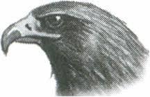 Контрольная работа по теме Птицы  hello html m46a04e79 jpg