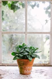 apartment herb garden. How To Grow A Window Garden \u0026 Green Your Apartment This Spring Herb T
