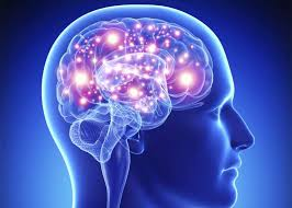 Image result for the human brain