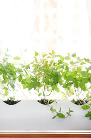 Kitchen Herb Garden Planter Make A Floating Pvc Window Planter A Beautiful Mess