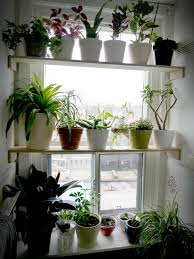 Kitchen Window Shelf Garden Windowjpg