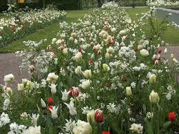 Small Picture 75 best jacqueline van der kloet images on Pinterest Gardens