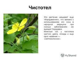 Презентация на тему Лекарственные растения Выполнил ученица  4 Чистотел Это растение