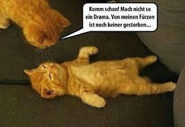 Katzen Bösen Beste Lustige Sprüche Meme Lustige Xdpediade 1