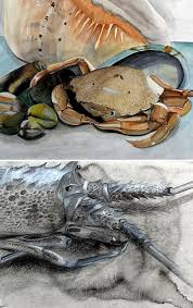 drawing of crustaceans igcse art