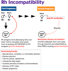 Rh Incompatibility Chart Rh Incompatibility Rosh Review Clinical Nurse Specialist