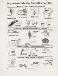 Macroinvertebrate Identification Key Homeschool