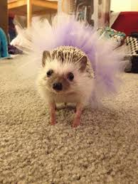 puppy bowl hedgehog cheerleaders. Exellent Bowl IMPORTANT The Puppy Bowlu0027s Hedgehog Cheerleaders Will Be Wearing Tutus For Bowl W