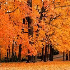 Fall iPad Wallpapers - Top Free Fall ...