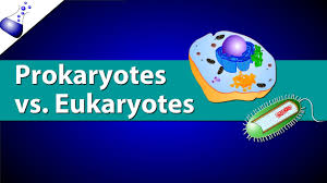 Compare Prokaryotic And Eukaryotic Cells Venn Diagram Prokaryotic Vs Eukaryotic Cells