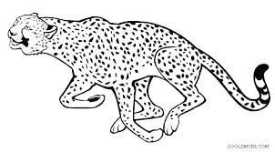 Cheetah With Squirrel Color Page Cheetah Cub Coloring Pages Sheet