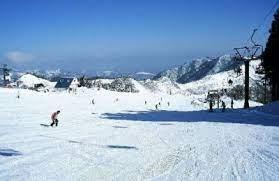 ハチ 北 スキー 場