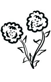 Fiori Bianco E Nero Disegno Libro Immagini Gratis Su Pixabay