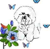 Image result for maltese dog gif