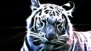 baby white tigers wallpaper. Exellent Wallpaper Image From Httpwwwhdwallpapersdownloadcomuploadtigerwallpaperbaby Whitetigerswallpaperjpg On Baby White Tigers Wallpaper