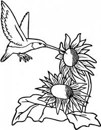 Small Picture Sunflower and Hummingbird Coloring Page Download Print Online