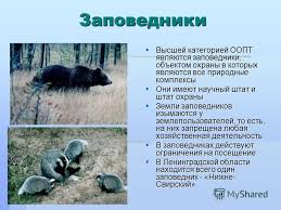 Презентация на тему Природа Ленинградской области Ленинградская  7 Заповедники