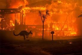 """Résultat de recherche d'images pour """"feux en australie"""""""