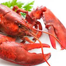 cooked lobsters. Modren Lobsters A 700g Cooked Lobster For Cooked Lobsters T