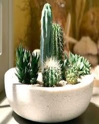 Small Picture Best 25 Mini cactus ideas on Pinterest Terrarium Terrarium diy