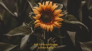 sunflower sierra burgess sierra burgess is a loser s