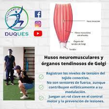🧐 Propioceptores y su clasificación:... - Duques Fisioterapia | Facebook