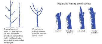 To Prune Or Not To PrunePrune Fruit Tree