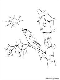 Small Picture Spring coloring page with the bird on birch and nest box
