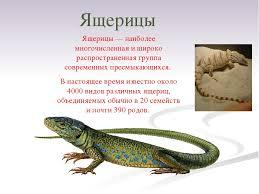 доклад о ящерице для класса с презентацией Школьные ru Ящерица реферат 3 класс