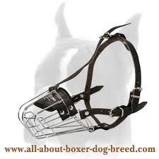 boxer dog harness boxer dog muzzle boxer dog collar dog leashes wire cage muzzle for boxer ample cage space