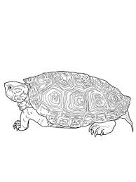 Small Picture Diamondback Terrapin coloring page Free Printable Coloring Pages