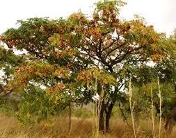 Tree Bearing Fruit