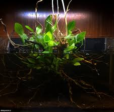 Biotope aquarium design contest 2014. quality test forum