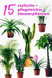 pflanzen ohne licht auskommen