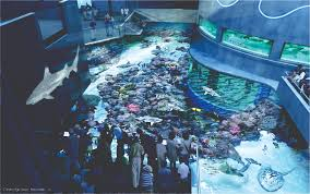 This Aquarium Is A Dog House Youtube Bill Gates Living Room - Bill gates house pics interior