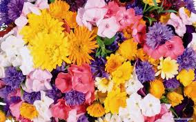 wallpapers flowers free 76 png transpa stock
