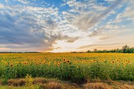 Image result for summer solstice pics