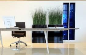 modern office plants. 5 Key Criteria For Choosing Office Plants Modern