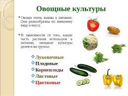 Презентация по технологии класс на тему Овощи Блюда из овощей  Овощные культуры Овощи очень важны в питании Они разнообразны по внешнему ви