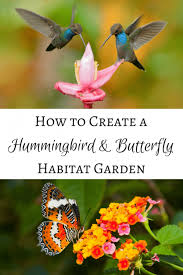 how to attract hummingbirds and erflies to a garden