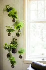Fresh Green Hanging indoor plants and patio plants - hanging plants for the  purpose of green house